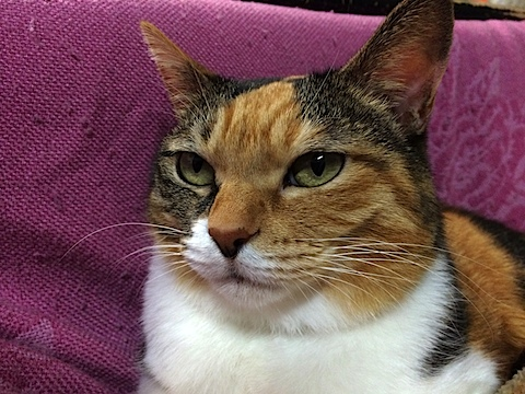 big_cat.jpg