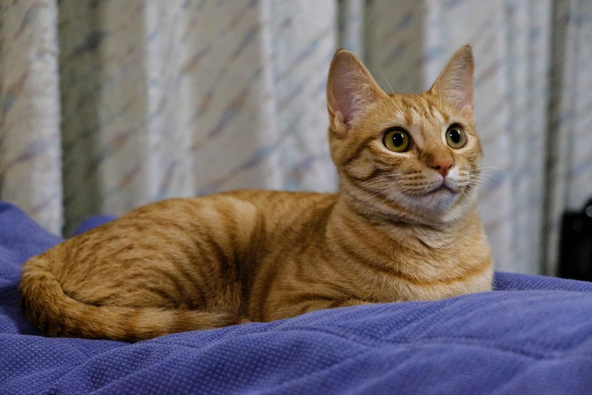 Cat aka3