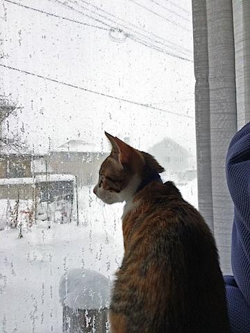 cat_snow.jpg