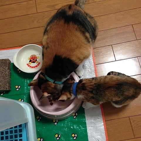 cats-eat.JPG