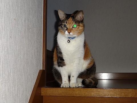 deka_cat.jpg