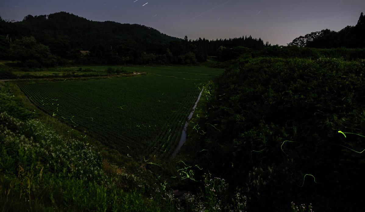 Firefly2 onogawa20160618