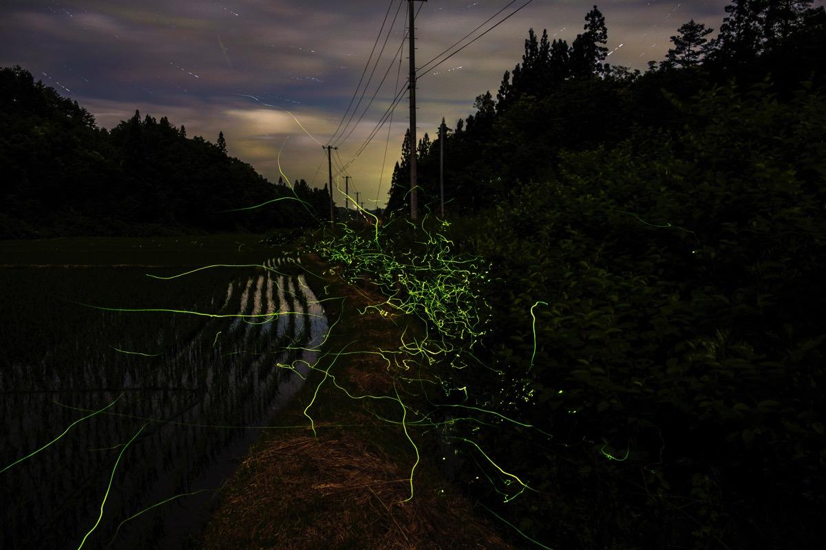Firefly5 sakasazawa20160617 jpg