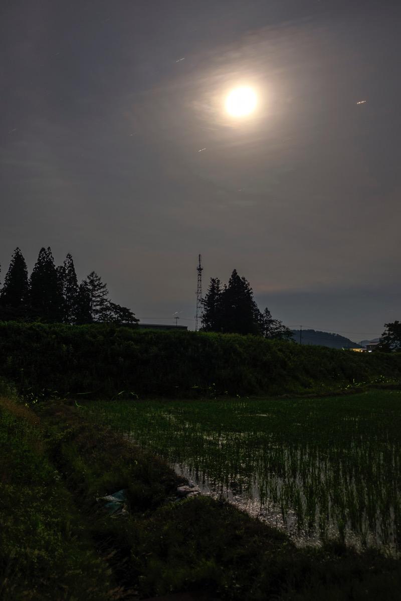 Firefly onogawa20160618