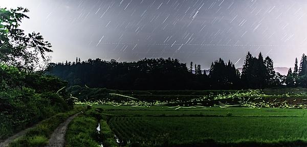 firefly_star.jpg
