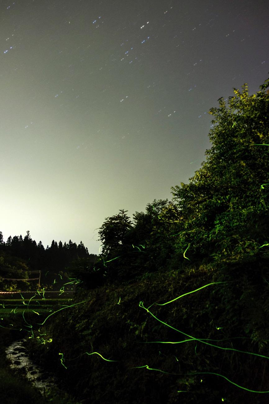 Firefly star20160701