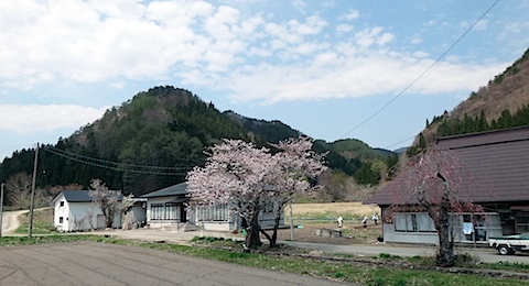 sakura_nouka2.jpg