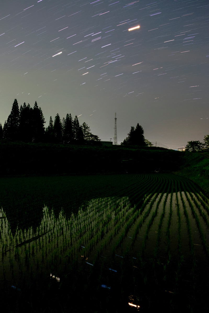 Star firefly